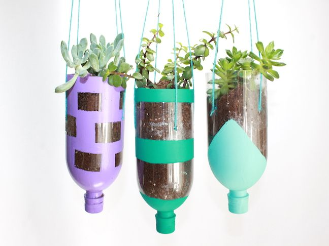 Eco Leader Victoria Transforms Plastic Bottles into Botanical Nursery